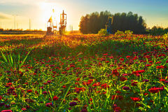 The oil pumping machine on the full of flowers grassland Stock Photos