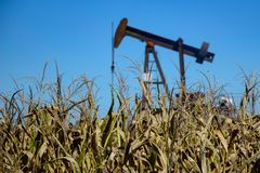 Corn and Oil Thriving in the field royalty free stock images