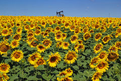 Oil Rig and Sunflower Filed Stock Photo