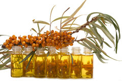 Oil of sea-buckthorn berries. Royalty Free Stock Photos