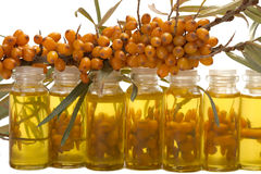 Oil of sea-buckthorn berries. Stock Photos