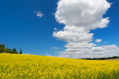 Oil seed rape field against blue sky Stock Photo