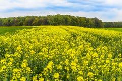 Oil seed rape field in Poland, Silesia. Stock Image