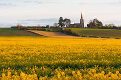Oil seed rape field in spring with church Stock Image