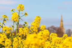Oil seed rape field in spring with church Stock Photos