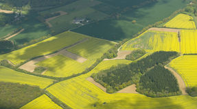 Oil seed Rape fields. Royalty Free Stock Photos