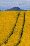 Oil seed rape & hill Stock Photos