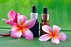 Oil spa with frangipani flowers on banana leaves Stock Photography