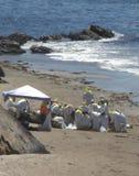 Oil Spill Hazmat Clean Up Stock Image