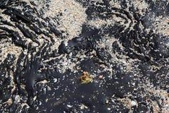 Oil Spill Stock Image