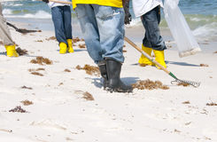 Oil spill workers cleaning beach Royalty Free Stock Image