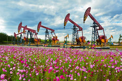 Oil sucking machine and cosmos flowers Royalty Free Stock Photos
