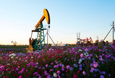 Oil sucking machine and flowers sunset Royalty Free Stock Images