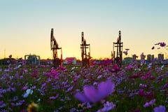 Oil sucking machine sunset Stock Image