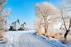 The oil sucking machines and trees with soft rime Stock Photos