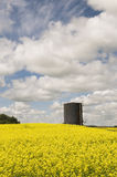 Oil Tank in Canola Field Royalty Free Stock Photos
