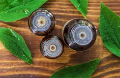 Oil of tea tree systems in a small warm bottle. stock images