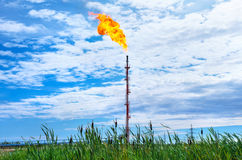 Oil Torch Stock Images
