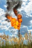 Oil torch Stock Photos