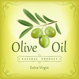 Oil.Vector decorative olive branch tree. For Royalty Free Stock Image
