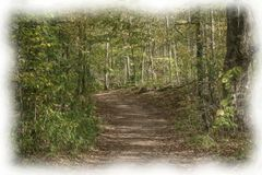 An oil of a wooded path. An oil painting of a wooded path in black and white Stock Images