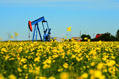 Oil In Your Canola Stock Images