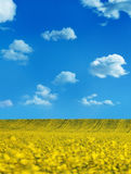 Oilseed Royalty Free Stock Photos