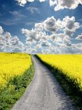 Oilseed and clouds Stock Photo