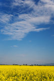 Oilseed field in bloom Stock Photography