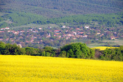 Oilseed Fields and Village Royalty Free Stock Photography