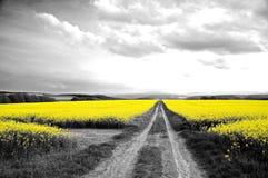 Oilseed gwałta pole Zdjęcie Royalty Free