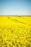 Oilseed Royalty Free Stock Photography