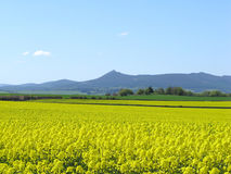 Oilseed rape and Bennachie Royalty Free Stock Image