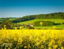 Oilseed Rape, Canola, Biodiesel Crop Stock Photo