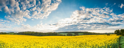 Oilseed Rape, Canola, Biodiesel Crop Royalty Free Stock Image