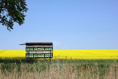 Summer background - oilseed field with beehiv. Summer background - yellow oilseed field with beehive beautiful summer background royalty free stock image