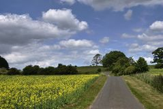Oilseed field by a country road Royalty Free Stock Photos