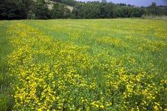 Oilseed stock photos