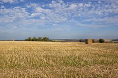 Oilseed rape stubble and scenery Royalty Free Stock Photography