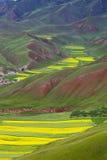 Oilseed Tarasujący pole zdjęcie stock