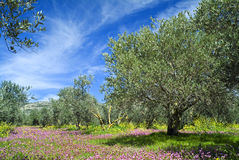 Oilve Waldung stockbild