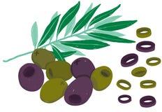 Oilves pretos do vetor e verdes painterly; illu editável, evolutivo ilustração do vetor