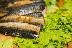 Oily Smoked Fish Filets on Bed of Green Lettuce. Close Up Still Life of Oily Smoked Fish Filets on Bed of Green Lettuce Leaves and Wooden Board with Copy Space Royalty Free Stock Photos