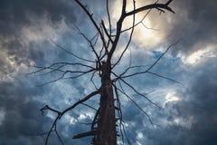Ointressant träd i den dramatiska himlen för storm royaltyfria bilder