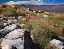Ointressant vildmark av de östliga toppiga bergskedjorna Royaltyfria Bilder