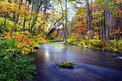 Oirase小河的秋天颜色 库存图片