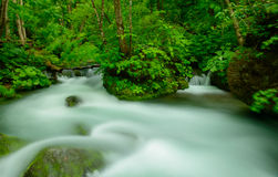 Oirase gorge in Aomori, Japan Royalty Free Stock Image