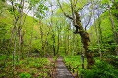 Oirase Gorge in Aomori, northern Japan Stock Photography
