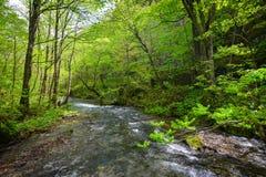 Oirase Gorge in Aomori, northern Japan Royalty Free Stock Image