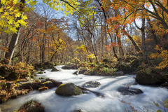 Oirase Gorge beautiful river druing the autumn season, Japan Royalty Free Stock Images